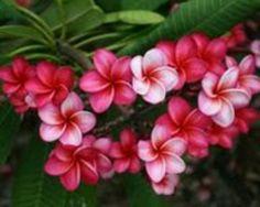 Aloha Kakou via Aunty Nania ...