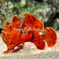 Super cool fish. Pretty Fish, Cool Fish, Ocean Life, Fishing, Amazing, Beautiful, Navy Life, Peaches, Pisces