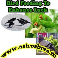 Secrets of bird feeding as per astrology, Bird Feeding In Astrology To Enhance Luck, get success in life, get rid of  malefic planetary impacts by bird feeding......free.