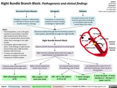 Right Bundle Branch Block: Pathogenesis and clinical findings College Nursing, Nursing School Notes, Nursing Tips, Nursing Schools, Cardiac Nursing, Pharmacology Nursing, Bundle Branch Block, Medical Laboratory Science, Human Anatomy And Physiology