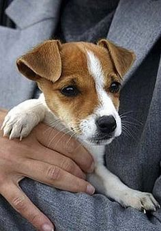 Jack Russell...just look at  that face!