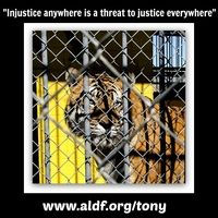 LDWF: Enforce Louisiana State Law & Ensure Tony The Tiger Is Released To A Reputable Sanctuary