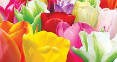 Plant Catalogs, Rose, Garden, Flowers, Plants, Pink, Roses, Lawn And Garden, Florals