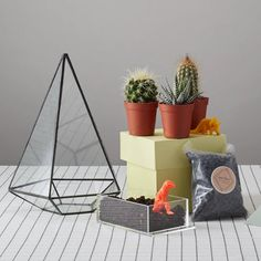 DIY terrarium kit includes cacti soil, aquatic gravel and 3 mini cacti with instructions to build your terrarium. This kit does not include the terrarium. Terrarium Diy, Terrarium Workshop, Terrariums, Mini Cactus, Home Garden Design, Kids Room Design, Cacti And Succulents, Indoor Plants, Decorating Your Home