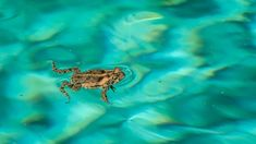 What is a waterless barrier and how could it slow cane toads? Cash Crop, Sheep Farm, Water Sources, When It Rains, Open Water, Toad, Amphibians, Western Australia, Drinking Water