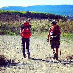 Peregrinos en el Camino de Santiago en Navarra  Más en  www placeok com  #spain #navarra #caminodesantiago #trek #trekking #placeok #travelblog #travelbloggers #travelinspector #travel #awesome #happy #bestoftheday #igers #amazing #photooftheday #cute #followme #like4like #repost #instagood #instamood #fun #follow #pretty #cool