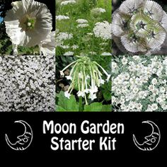 Moon Gardens: #Moon #Garden Starter Kit. A Moon Garden is filled with plants and flowers that are meant to be most appreciated at dusk or after sunset. Moon Gardens contain flowers that bloom at night, flowers that echo the shapes of the night, and flowers that attract night pollinators.
