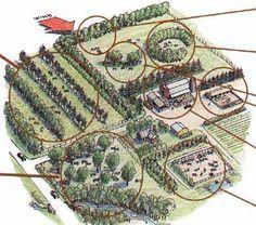 agroforestry+systems+layout | Planning a silvopastoralsystem