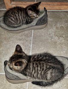 cats.........