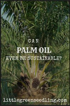 Should we boycott palm oil, and can it ever be sustainable? Organic Living, Natural Living, Green Living Tips, Love The Earth, Healthy Lifestyle Tips, Organic Lifestyle, Rainwater Harvesting, Environmental Education, Natural Cleaners