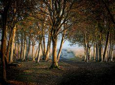Het Bargerveen is een natuurgebied van Staatsbosbeheer in de gemeente Emmen. Het is 2.100 hectare groot en bestaat grotendeels uit hoogveen. Het is het laatste restant van enige omvang in Nederland van het eertijds 3000 vierkante kilometer grote Bourtangermoeras.