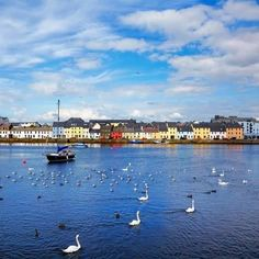 is Galway Bay in Galway, Ireland. Seems to be the city of the swans.This is Galway Bay in Galway, Ireland. Seems to be the city of the swans. Connemara, Ireland Vacation, Ireland Travel, Cork Ireland, Dublin Ireland, Cadiz, Destinations, Dream Vacations, Wonders Of The World