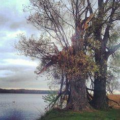 "@kiedys's photo: ""Krajobraz po burzy."" Celestial, Sunset, Outdoor, Sunsets, Outdoors, Outdoor Living, Garden"