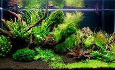180l - roślinne - gintur