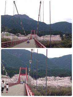 お花見には絶好の穴場! 熊本県下益城郡美里町のともち未来病院