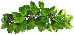 36 Magnolia Leaf Swag