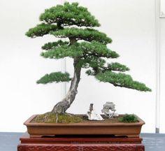 bonsai plants | Myth Buster 9: Bonsai Plants are Auspicious