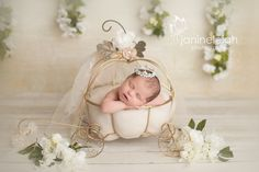 cinderella carriage for baby Newborn Pictures, Baby Pictures, Baby Photos, Children Photography, Newborn Photography, Photography Ideas, Cinderella Pumpkin, Cinderella Carriage, Baby Carriage