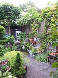 courtyard garden melissehome on - Home - Cottage Garden Plants, Garden Spaces, Home And Garden, Cacti Garden, Back Gardens, Small Gardens, Outdoor Gardens, Garden Makeover, Small Garden Design