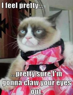 Grumpy Cat feels pretty... For the best funny pics and hilarious jokes visit www.bestfunnyjokes4u.com/lol-funny-cat-pic/