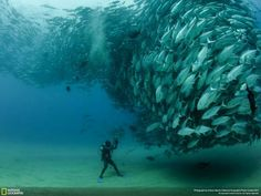 Fishnado!