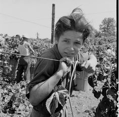 Dorothea Lange -  young farm worker