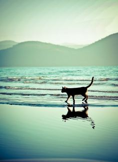 I have never seen a cat walking on the beach!