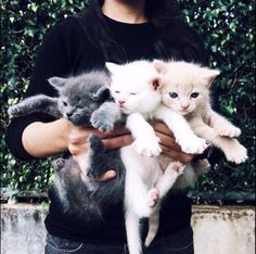 CUTE AS BALLS!!! The fact I'll never be able to hold kittens like that because I'm allergic :(