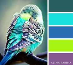 179 animal from this site Color Schemes Colour Palettes, Colour Pallette, Color Palate, Color Combinations, Blue Palette, Wie Zeichnet Man Manga, Color Harmony, Design Seeds, Color Stories