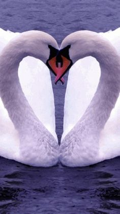 ★♥★ Heart in Nature - Swan Heart ★♥★ I Love them!                                                                                                                                                      More
