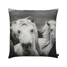 As seen in Westchester Magazine: We love the movement of this herd of wild Icelandic horses photographed from the front and printed as a digital photo print on a cushion in the recognized cotton canva