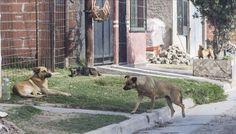 """#""""Veo un perro en la calle y me espanto"""" - El Tribuno.com.ar: El Tribuno.com.ar """"Veo un perro en la calle y me espanto"""" El Tribuno.com.ar…"""