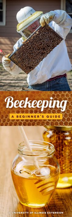Beekeeping: A Beginner's Guide #bees #honey #101