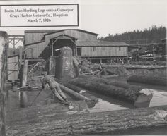 Boom man herding logs onto conveyer @ Grays Harbor Veneer Lumber Mill, Wood Mill, Tree Logs, Old Trees, Vintage Pictures, Old Pictures, Gunnison Colorado, White Tractor, Paul Bunyan