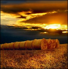 Beautiful Photos of Wheat Fields | Golberz.Com