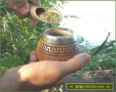 How to CURE your yerba mate gourd. Tips to prevent and reduce mold.