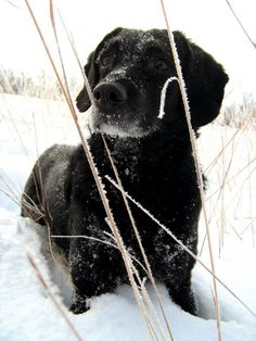 Winter pet safety - Sweaters are a must, even for dogs with long fur!
