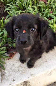 when a ladybug meets a puppy via