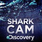 #SharkCam!