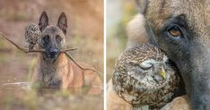 Some friendships might seem unlikely, but in reality, move mountains and melt hearts. A few years ago we wrote about a beautiful, yet uncommon, the friendship between a shepherd dog Ingo and an owl Poldi and today we present even more feathered friends of the pup. Ingo and friends are the members of Tanja Brandt's family who is an incredible animal photographer.