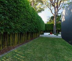 Bamboo screening.