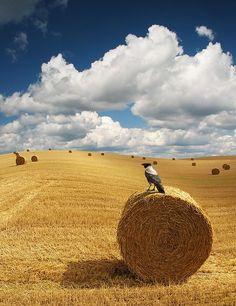 Hay field Blog Fotografia, Fotografia Macro, Color Photography, Landscape Photography, Nature Photography, Travel Photography, Foto Poster, Fields Of Gold, Country Scenes