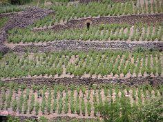 Vignes en terrasses de Boudes