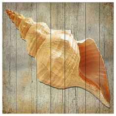 Driftwood Cone Shell Wood Wall Art