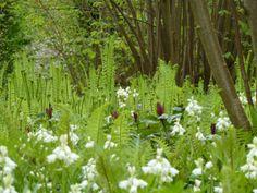 Sissinghurst the Nuttery. Ostrich ferns