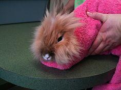 Bunny Burrito - June 30, 2011