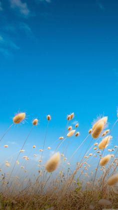 Beautiful Lock Screen - Bing images