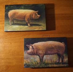 Pig Farm Piglets Picture SINGLE CANVAS WALL ART Print