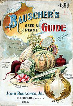Vintage Seed Packet #vintagelettering