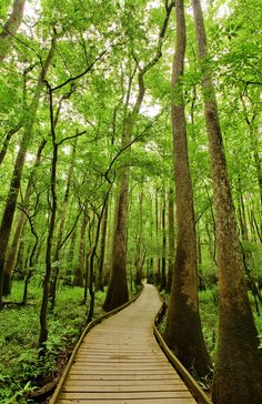 Congaree National Park in South Carolina has astonishing amount of biodiversity.This could be a great place for a hike.